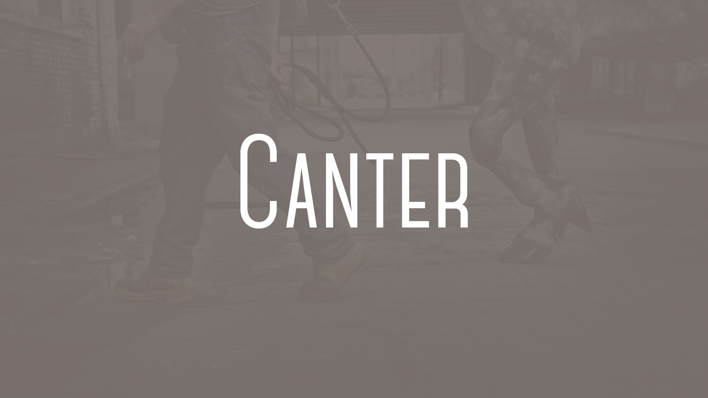 Canter - Fontfabric™